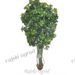MINI SZEFLERA sztuczne drzewko NAJWYŻSZA JAKOŚĆ