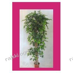 sztuczne drzewko FIKUS ZIELONY green 220