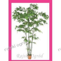 BAMBUS 245cm OZDOBA roślina DEKORACJA drzewo DUŻE