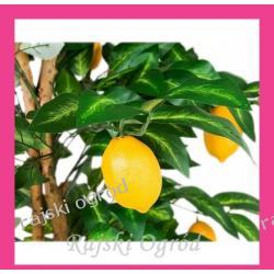 sztuczne drzewko CYTRYNA ~185cm drzewko owocowe