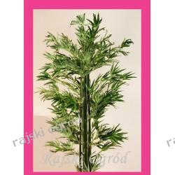 BAMBUS sztuczne drzewko ~190cm  i inne drzewka