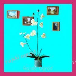 SZTUCZNY KWIAT sztuczne kwiaty ORCHIDEA ~ 85cm