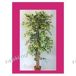 HIT! FIKUS GREEN-YELLOW ~190cm sztuczne drzewko