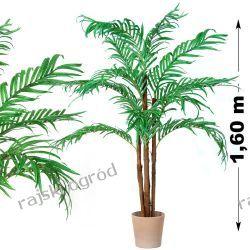 PALMA PALEMKA 160cm kokos