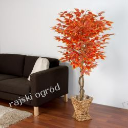 sztuczne drzewko FIKUS BENIAMIANA CZERWONY 165CM