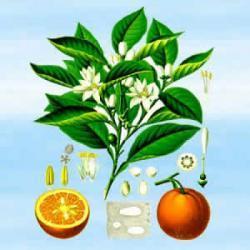 Kwiat pomarańczy - w magii miłosnej i namiętności. Energia Słońca