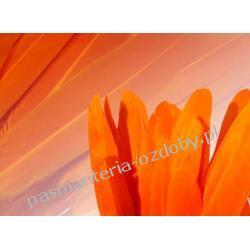 KACZE PIÓRA, KOLOROWE PIÓRKA  WINETOU 9-14 cm - pomarańczowy