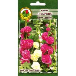 nasiona MALWA CHATERS różowa hit