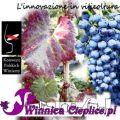 IX Konwent Polskich Winiarzy