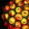 Święto kwitnącej jabłoni'14