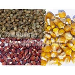 KONOPIE WEDKARSKIE + kukurydza czerwona i żółta Karmy i smakołyki