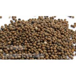 Wyka brązowa, nasiona wyki dla ptaków, na ryby Karmy i smakołyki