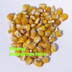 Kukurydza żólta na zanętę 2,00 zł/kg Pozostałe