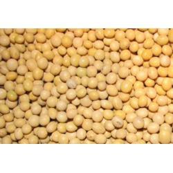 Soja nasiona / ziarno soi - ekspresowa dostawa Karmy i smakołyki