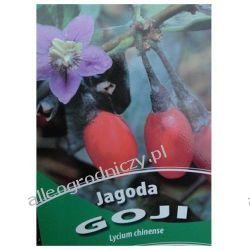JAGODA GOJI - SADZONKI Kołcowój chiński (szkarłatny)
