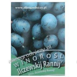WINOROŚL Iliczewskij Rannij winogrono GRANATOWE