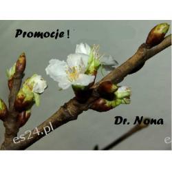Promocja ! Dr Nona Listopad 2015
