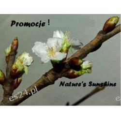 Promocje ! Nature's Sunshine Listopad 2015r.