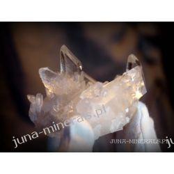 Kryształ górski Skamieliny, minerały i muszle