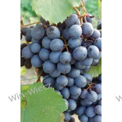 Sadzonki Winorośli Rośliny owocowe