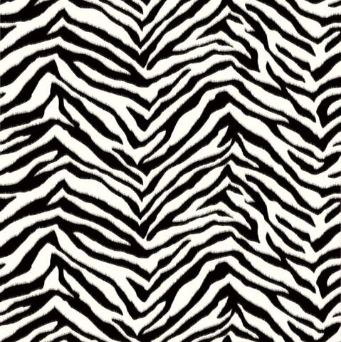 Tapeta zebra w zbli 380 eniu