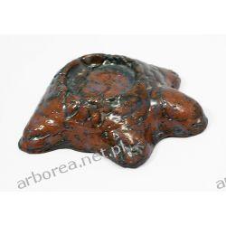 Żółw błotny - świecznik lubiący brąz