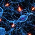 Kofeina, a układ nerwowy