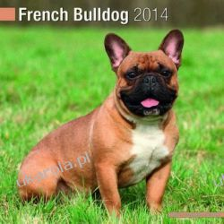 Kalendarz French Bulldog 2014 Calendar