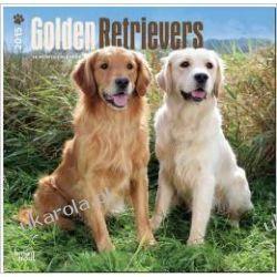 Kalendarz Golden Retrievers 2015 Wall Calendar