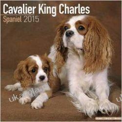 Kalendarz Cavalier King Charles Spaniel (Studio) 2015 Projektowanie i planowanie ogrodu
