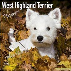 Kalendarz westie West Highland Terrier Puppies Calendar 2016 Projektowanie i planowanie ogrodu
