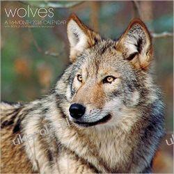 Kalendarz Wilki Wolves 2016 Calendar