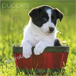 Kalendarz szczeniaki Puppies 2016 Calendar szczenięta małe psy