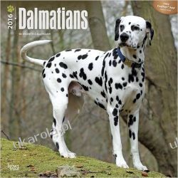 Kalendarz Dalmatyńczyki Dalmatians 2016 Wall Calendar dalmatyńczyk