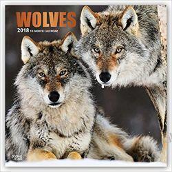 Kalendarz Wilki Wolves 2018 Wall Calendar