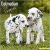 Kalendarz Dalmatyńczyki Szczenieta Dalmatian Puppies 2018 Calendar