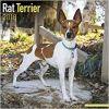 Kalendarz Rat Terrier 2018 Calendar