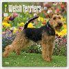 Kalendarz Terier Walijski Welsh Terriers 2018 Wall Calendar
