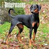 Kalendarz Dobermany Dobermanns International Edition 2018 Wall Calendar