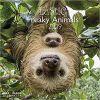 Kalendarz Zwierzęta Freaky Animals 2019 Calendar