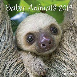 Kalendarz Dzieci Zwierząt Baby Animals 2019 Calendar