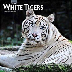 Kalendarz Białe Tygrysy White Tigers 2019 Square Wall Calendar
