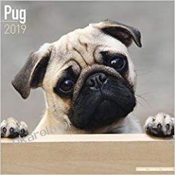 Kalendarz Mops Pug Calendar 2019