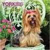 Kalendarz z jorkami Terriers Yorkshire Terrier 2019 Calendar