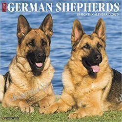 Just German Shepherds 2020 Wall Calendar