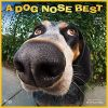 Dog Nose Best, A 2020 Square Wall Calendar psie nosy