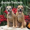 Border Terriers 2020 Square Wall Calendar