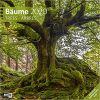 Kalendarz Drzewa Lasy Trees 2020 Calendar