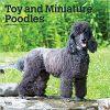 Kalendarz Pudle Toy and Miniature Poodles 2020 Calendar