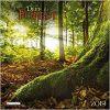 Kalendarz Deep Forest 2020 Lasy Calendar